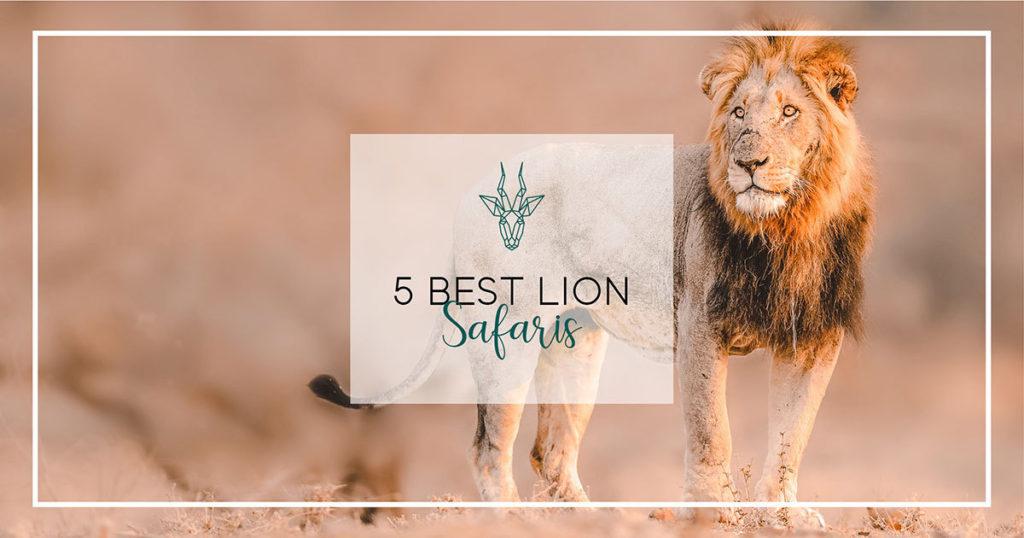 5 best lion safaris