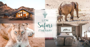 lion safari itinerary
