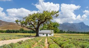 Best activities Franschhoek
