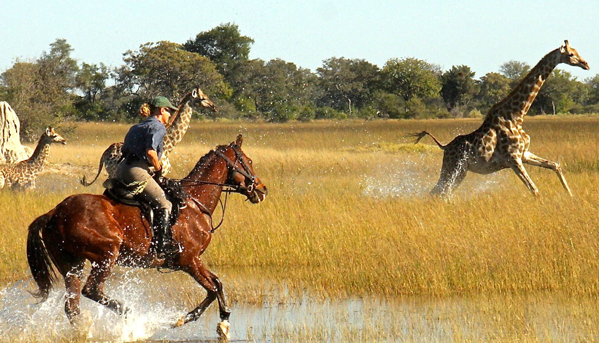 Horse safari Botswana