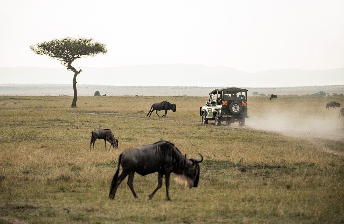 Game drive Serengeti